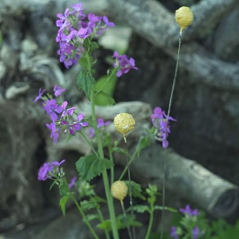 DRUM STICK Fleur en métal recyclé